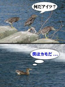 2010_10_16_06