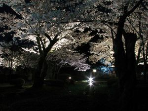 2011_04_21_10